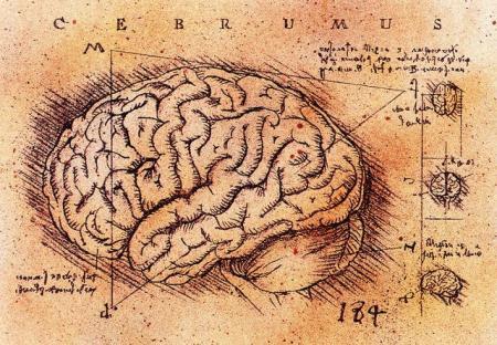 medium_brains.4.jpg